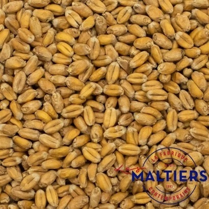Malte Le Maltiers Trigo